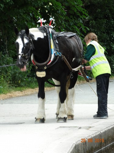 The horses were changed with each trip due to the hot weather
