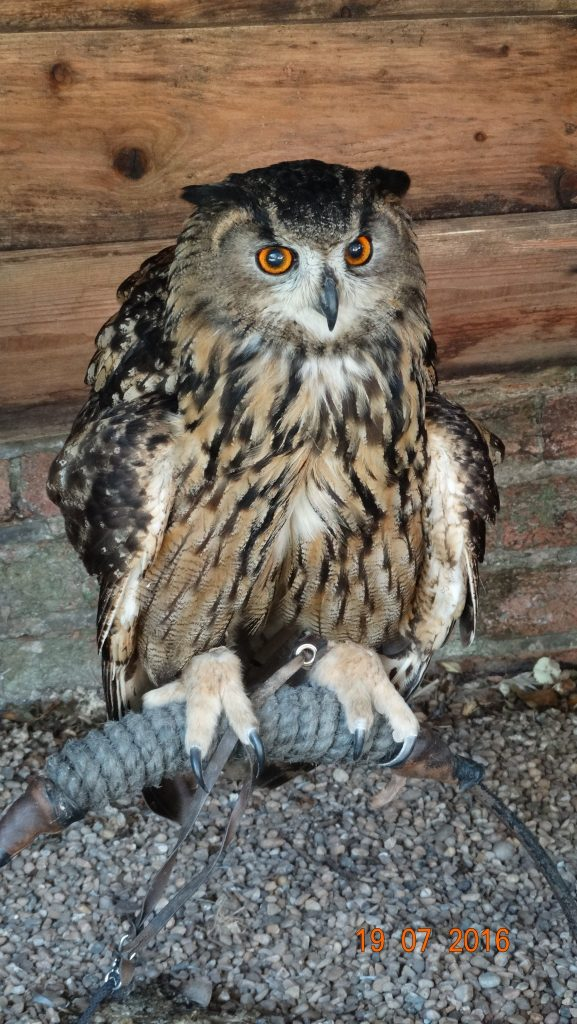 Talia the Eagle Owl. The children did have their picture taken with this magnificent bird