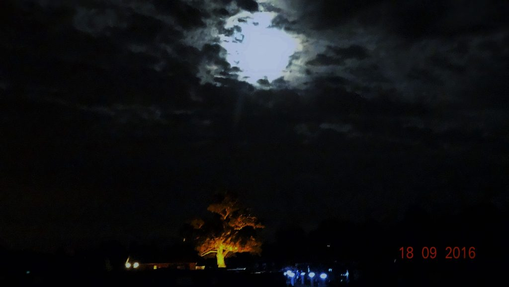 Moon with an oak tree in the marina that was lit up